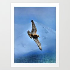 Peregrin Falcon Soaring Art Print