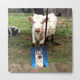 Happy-D & Cow Metal Print