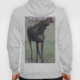 Missy willows evening Hoody