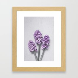Three Light Purple Hyacinths Framed Art Print