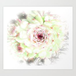 Dreaming Hens and Chicks Art Print