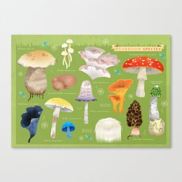 Mushroom Species Canvas Print