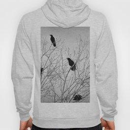 A Murder of Crows Hoody