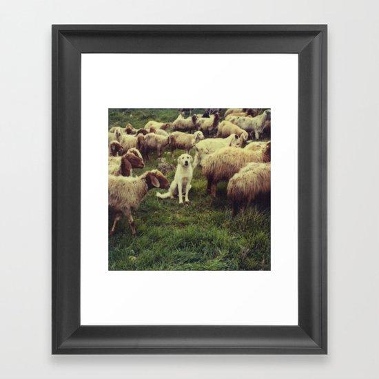 Herding dog, male, south of Israel, scaned sx-70 Polaroid Framed Art Print