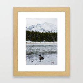 Mountain Mallard Framed Art Print