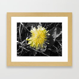 Photo  Framed Art Print