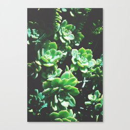 Succulent Dew Canvas Print