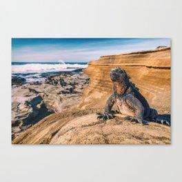 Galapagos marine iguana sun tanning on beach Canvas Print