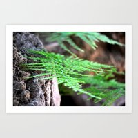 fern Art Prints featuring fern by  Agostino Lo Coco