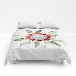 King Protea II Comforters