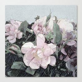 Shabby-chic rose bush Canvas Print