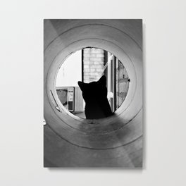 Curiosity Metal Print