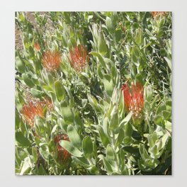 Proteas Canvas Print