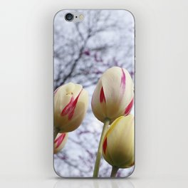 Tulips Ready For Lift Off iPhone Skin
