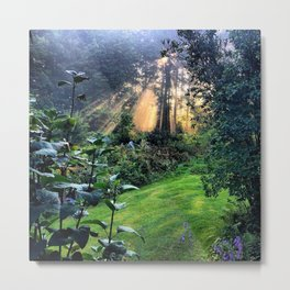 Magic Morning Sunlight Metal Print