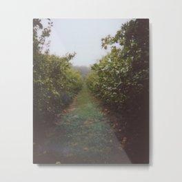 Orchard Row Metal Print