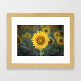 Tournesol jaune Framed Art Print