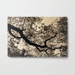 Golden trees Metal Print
