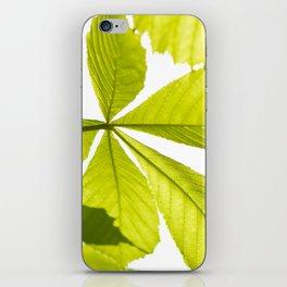 Aesculus horse chestnut foliage iPhone Skin