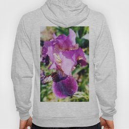 Purple Striped Bearded Iris Hoody
