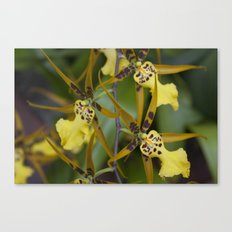 Sunny Orchid Canvas Print