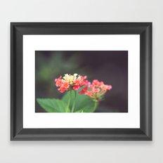 Tiny Lovelies Framed Art Print