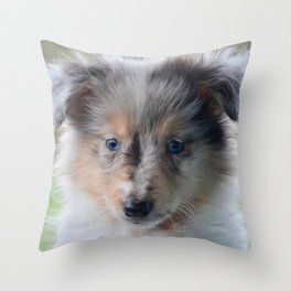 Blue-eyed Portrait of a Shetland Sheepdog Puppy Throw Pillow