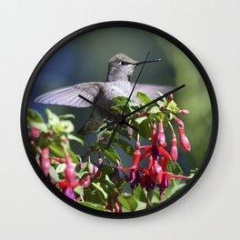 the posing hummingbird Wall Clock