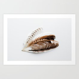 Feathers on White - Nature Photography Art Print