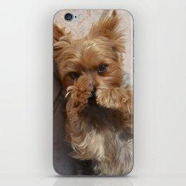 Put Em' Up - The Yorkie Dog iPhone Skin