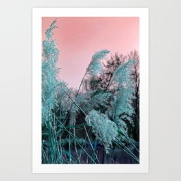 Delicate grasses Art Print