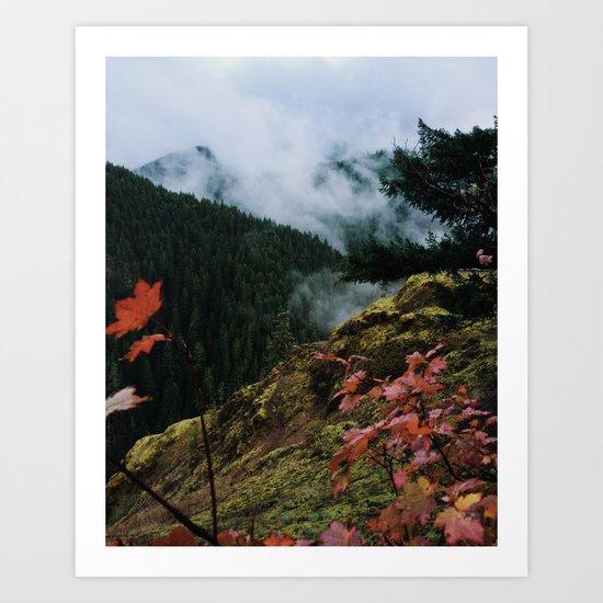 Salmon-Huckleberry Wilderness Art Print