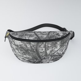 The old eucalyptus tree Fanny Pack