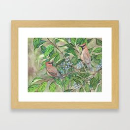 Cedar Waxwings bird and berries Framed Art Print