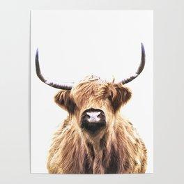 Highland Cow Portrait Poster
