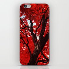 Red Canopy iPhone & iPod Skin
