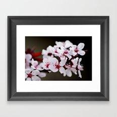 Signs of Spring 2 Framed Art Print