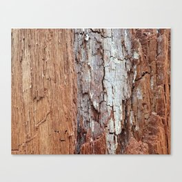 Natural Wood Texture: Maine Canvas Print