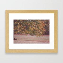 Park Tree Framed Art Print