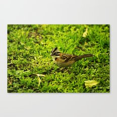 Running Sparrow Canvas Print