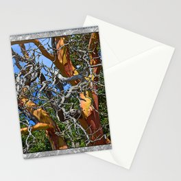 MADRONA TREE DEAD OR ALIVE Stationery Cards