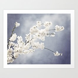 Floral Spring Nature Photography, Blue Grey White Flower Branches Art Print