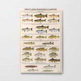 Illustrated Great Lakes Fishing Sportsmen's Game Fish Identification Chart, Superior, Huron, Ontario Metal Print