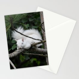 Sleeping Lily the beautiful White Albino Squirrel Stationery Cards
