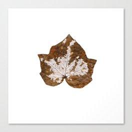 Skeleton leaf I Canvas Print