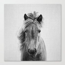 Wild Horse - Black & White Canvas Print