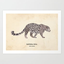 Snow Leopard January 2014 Print #1 Art Print