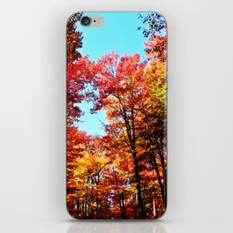 Fall Forest Delight iPhone Skin