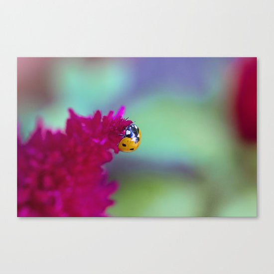 Color Me Beautiful Canvas Print