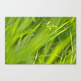 Shallow Blades of Grass Canvas Print